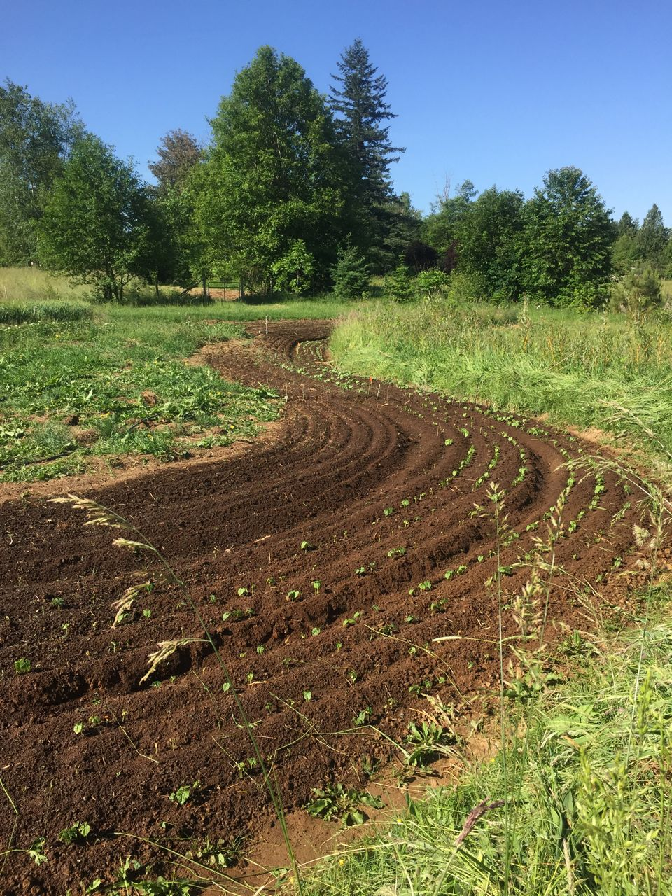 Salish Seed Garden Funding