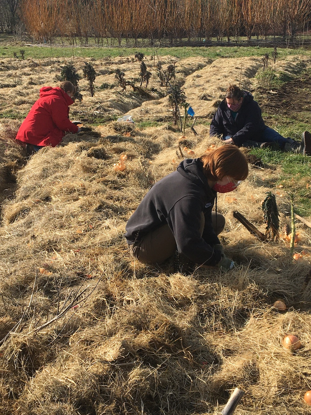 Seed Garden Work Party – April 18, 1-4pm
